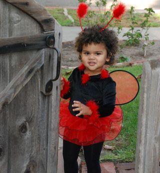 Sophia rankin ladybug