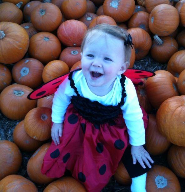 Cora ladybug pumpkin