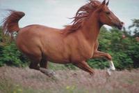 Horse20running